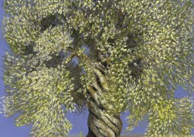 Kim's Olive Tree